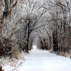 Winter At Lover's Lane
