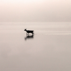 Blue Heron, Deer And An Egret On A Foggy Morning