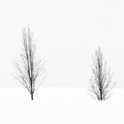 Two Trees Deep In Snow
