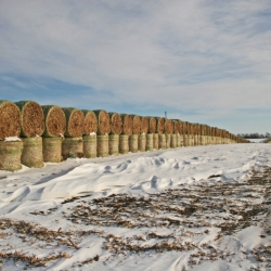 Bales For The Winter