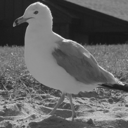 Seagull By The Beach