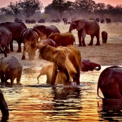 Watering Hole Hwange National Park