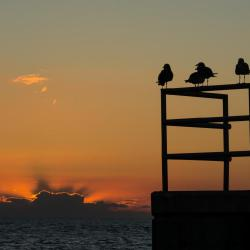 birds at key west sunset