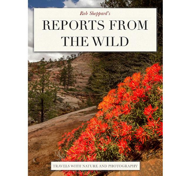 Reports From The Wild