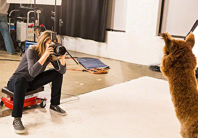 Behind The Scenes With An Animal Photographer