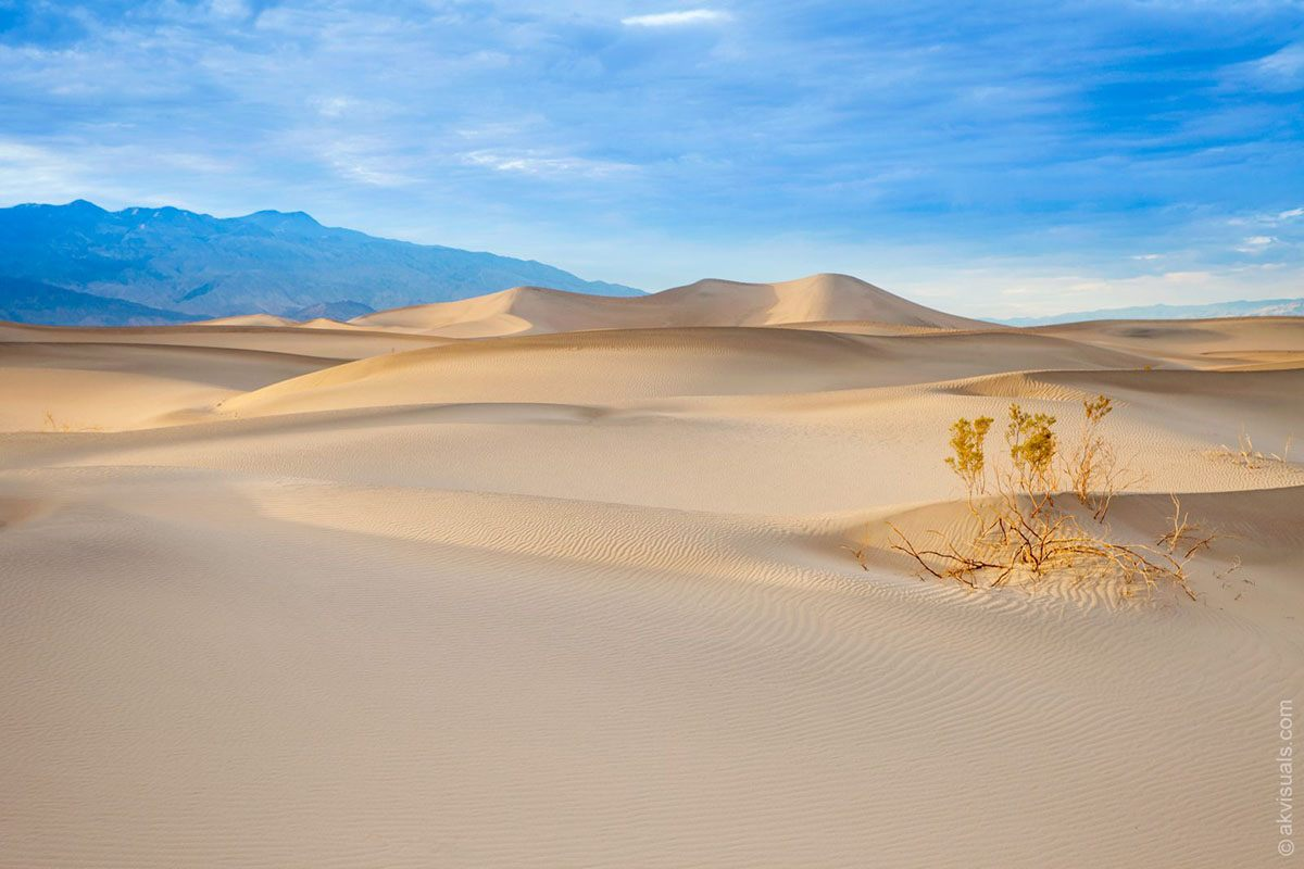 """""""Life in Death Valley"""" by Alex Kay"""